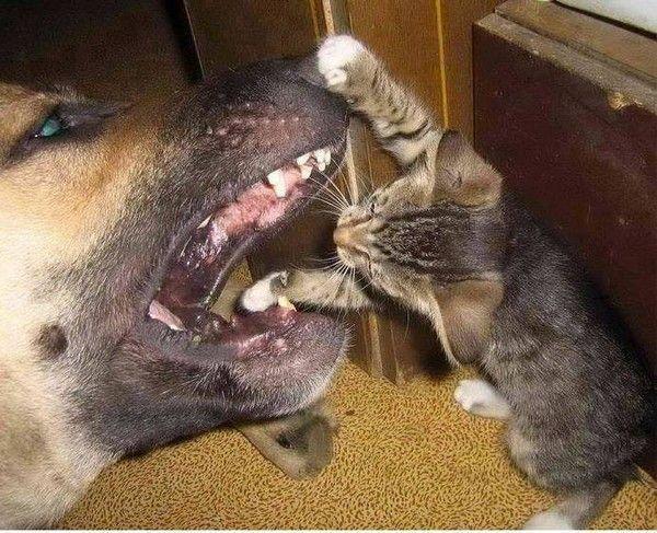 Chien chat - Photo de chien et chat mignon ...